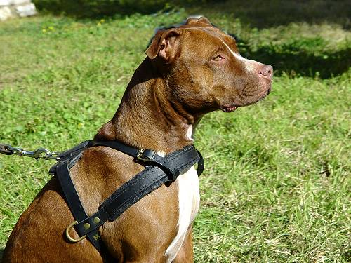 Comfortable and easy in wearing dog harness