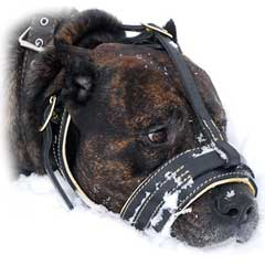 Safe and reliable leather muzzle