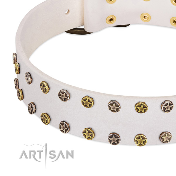Extraordinary studs on full grain leather collar for your pet