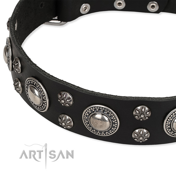 Everyday use embellished dog collar of high quality leather
