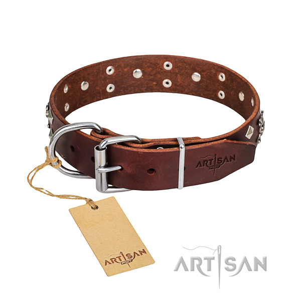 Everyday walking dog collar of finest quality leather with adornments