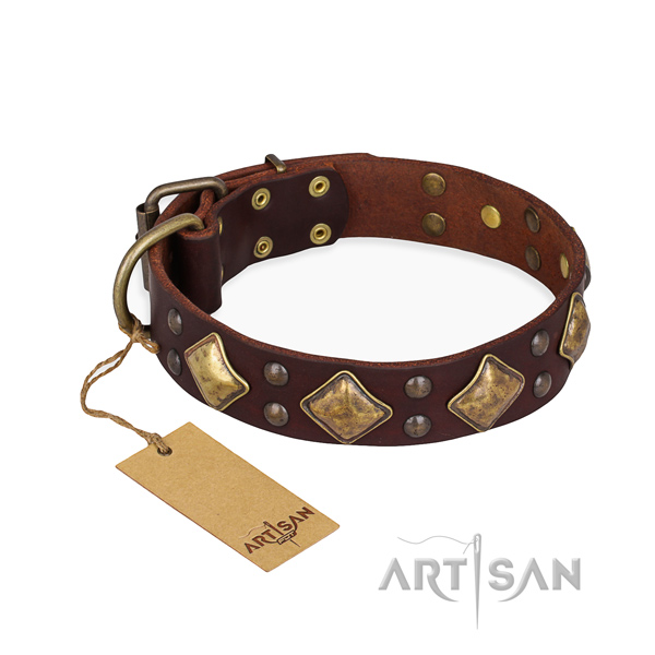 Daily use amazing dog collar with corrosion resistant D-ring