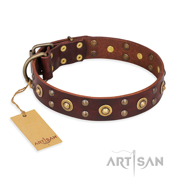 Impressive full grain natural leather dog collar with corrosion resistant fittings