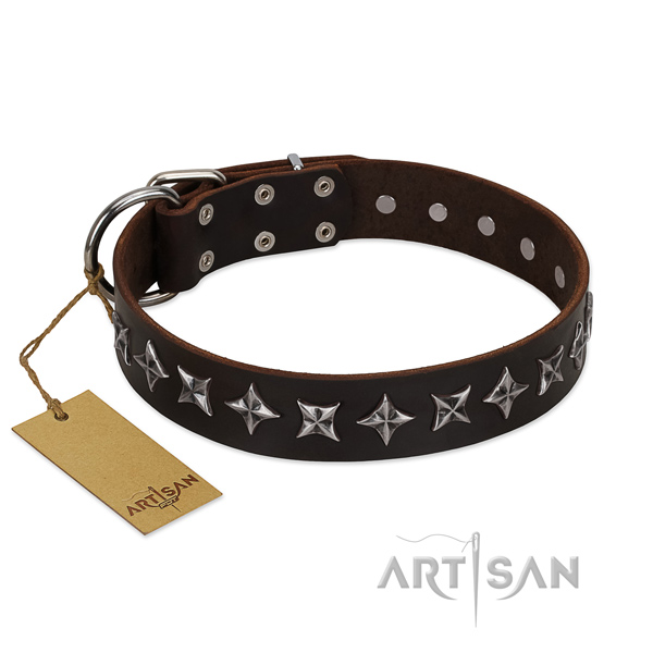 Walking dog collar of best quality genuine leather with embellishments