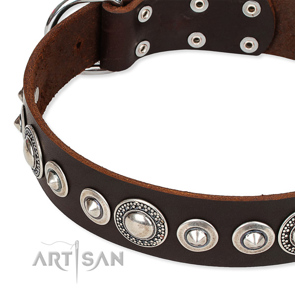 Stylish walking studded dog collar of quality full grain genuine leather