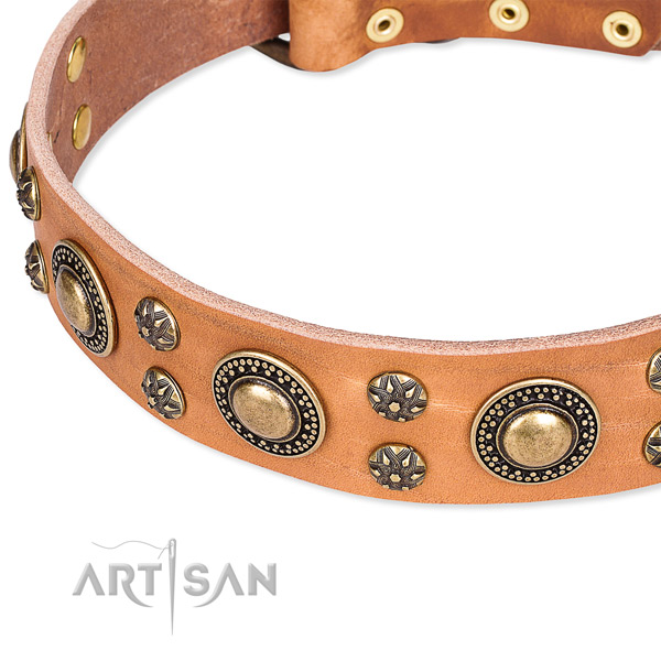 Everyday walking embellished dog collar of strong genuine leather
