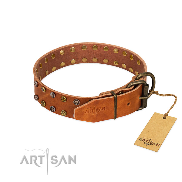 Fancy walking leather dog collar with exceptional embellishments