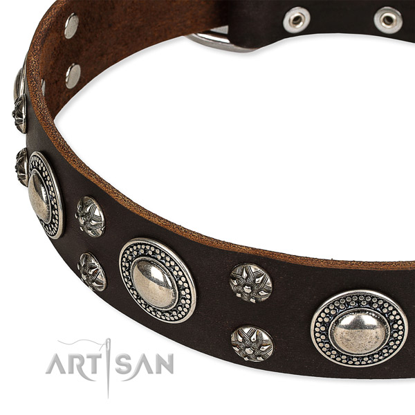 Daily walking decorated dog collar of fine quality leather