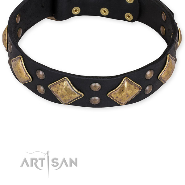 Leather dog collar with stunning rust resistant embellishments