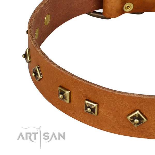 Remarkable genuine leather collar for your beautiful four-legged friend