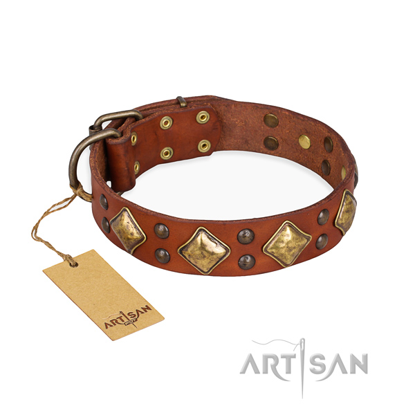 Stylish walking exquisite dog collar with rust resistant hardware