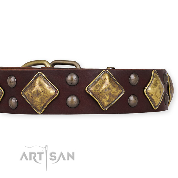 Natural leather dog collar with unusual strong decorations