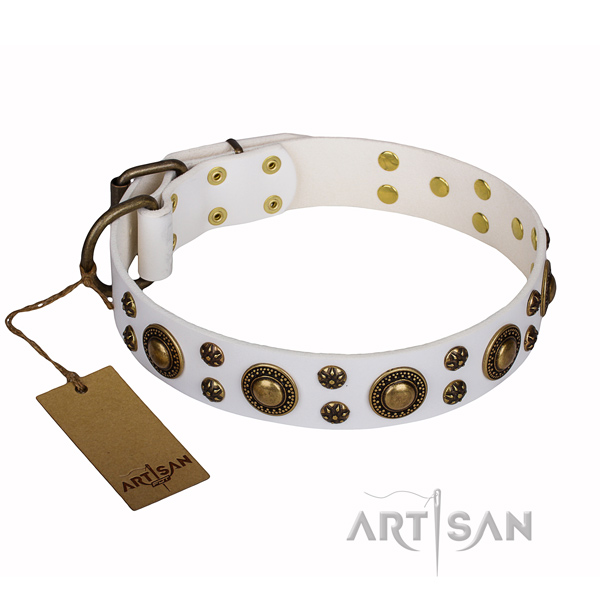 Fancy walking dog collar of quality leather with adornments