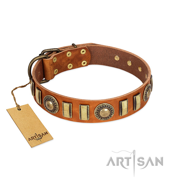 Trendy leather dog collar with reliable traditional buckle