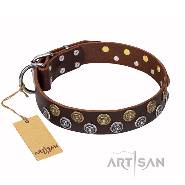 Walking dog collar of best quality full grain natural leather with embellishments