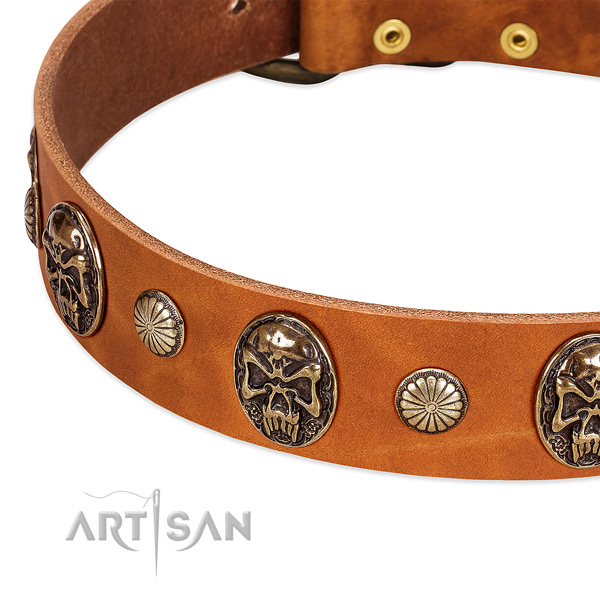 Rust resistant studs on full grain genuine leather dog collar for your pet