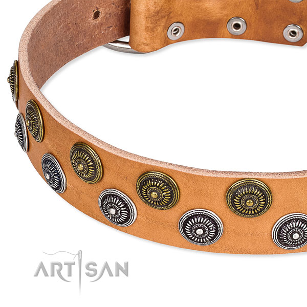 Stylish walking studded dog collar of reliable full grain leather