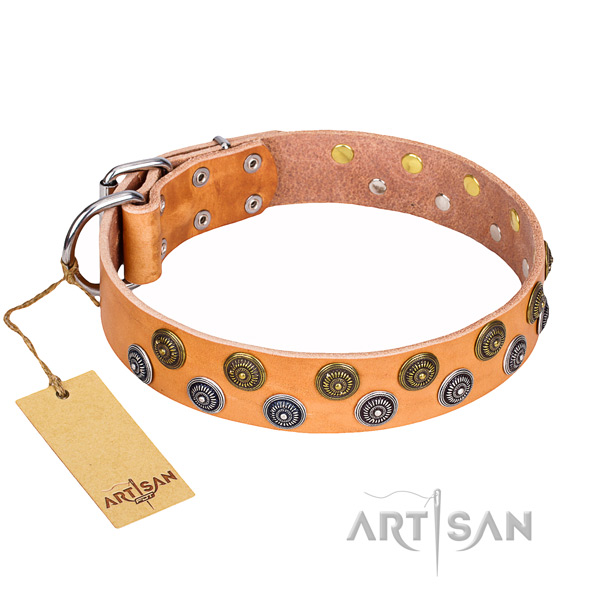 Daily use dog collar of durable leather with decorations