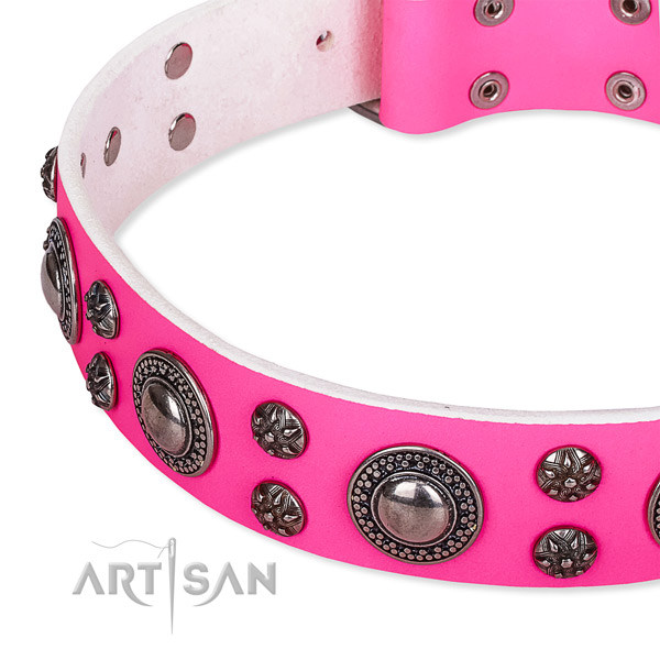 Walking studded dog collar of quality leather