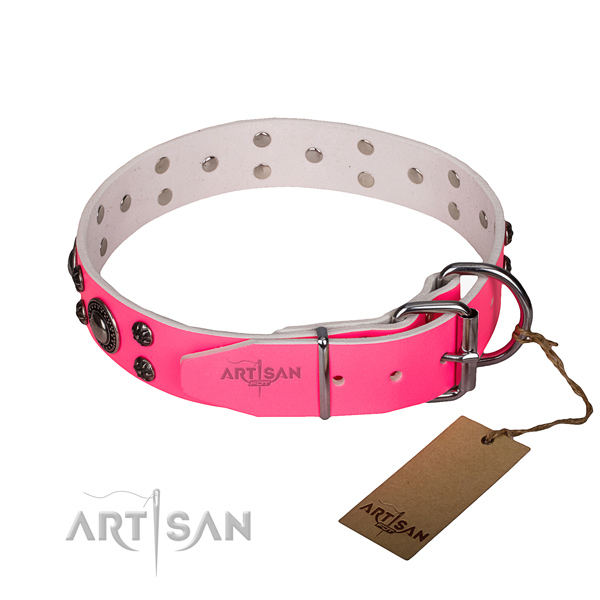 Comfy wearing decorated dog collar of quality full grain leather