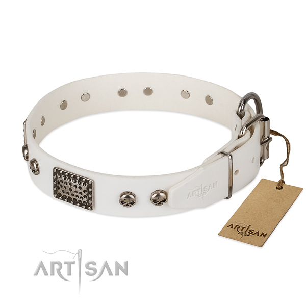 Reliable studs on everyday walking dog collar