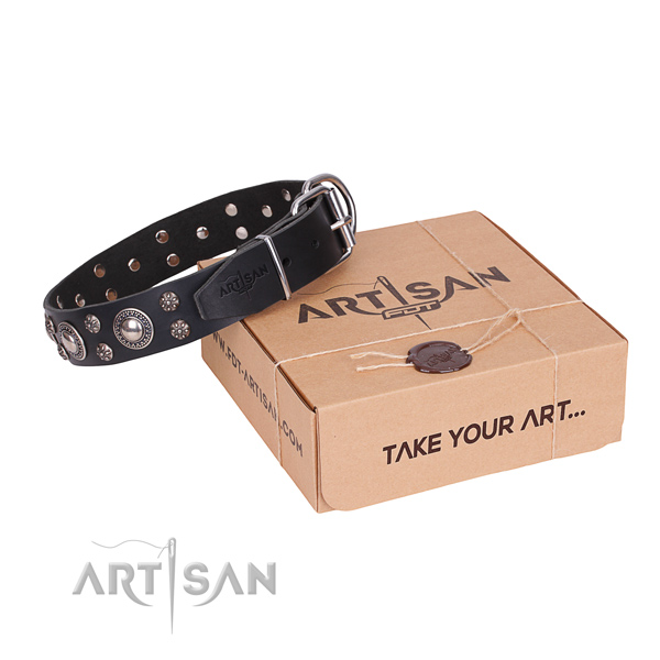Stylish walking dog collar of best quality natural leather with adornments