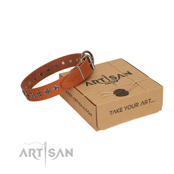 Basic training dog collar of high quality full grain genuine leather with studs