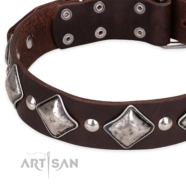 Fancy walking decorated dog collar of strong leather