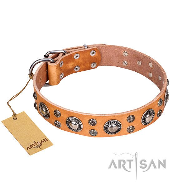 Walking dog collar of strong natural leather with studs