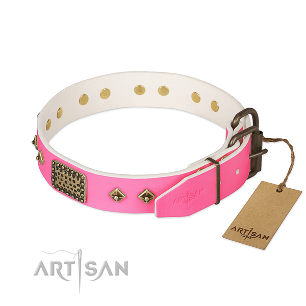 Rust-proof embellishments on everyday walking dog collar