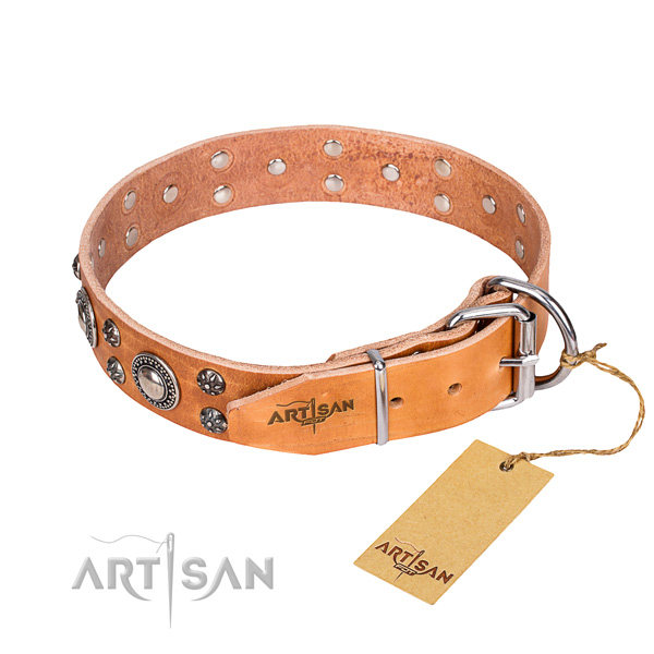 Everyday walking studded dog collar of best quality full grain natural leather