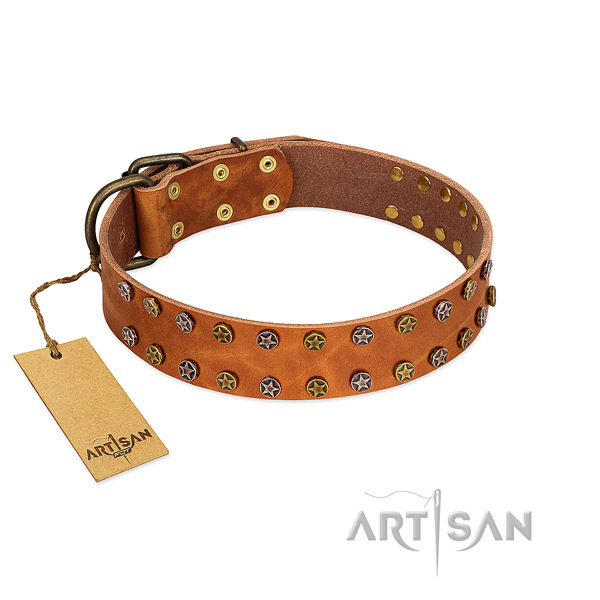 Everyday walking high quality leather dog collar with studs