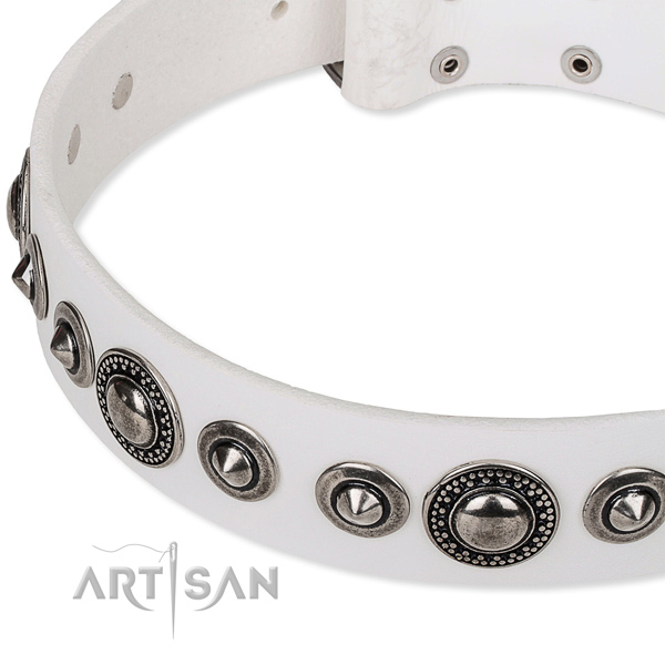 Stylish walking studded dog collar of fine quality full grain genuine leather