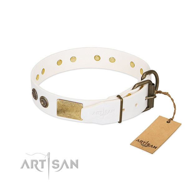 Rust-proof fittings on leather collar for everyday walking your doggie