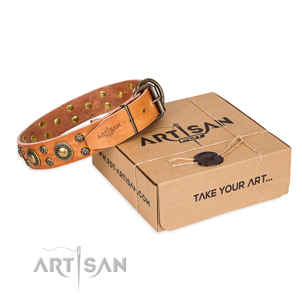 Daily walking dog collar of high quality natural leather with adornments