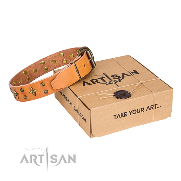 Walking dog collar of high quality leather with studs