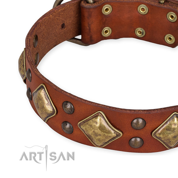 Full grain leather collar with reliable fittings for your impressive canine