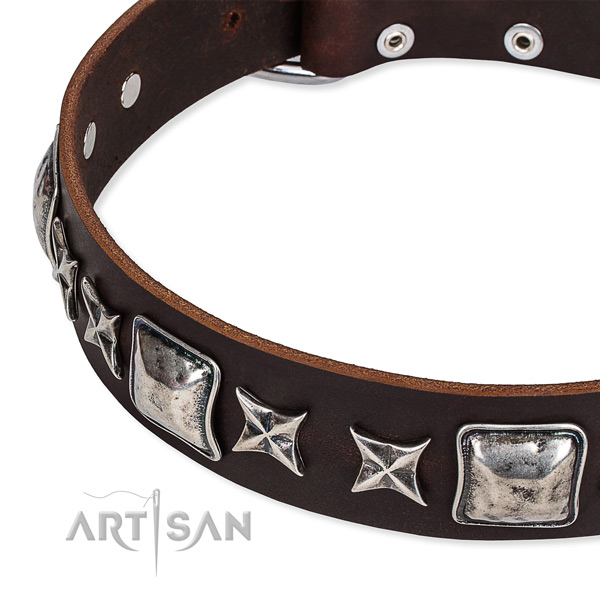 Everyday use studded dog collar of best quality full grain leather