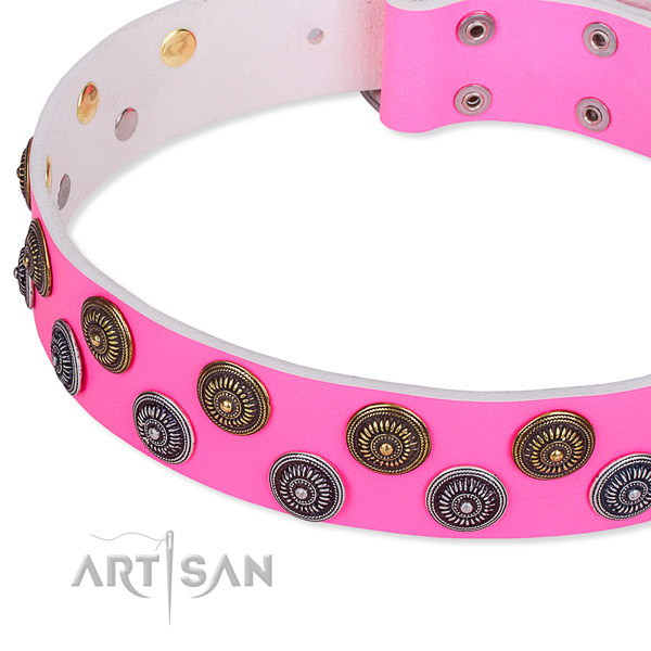 Comfortable wearing studded dog collar of reliable natural leather