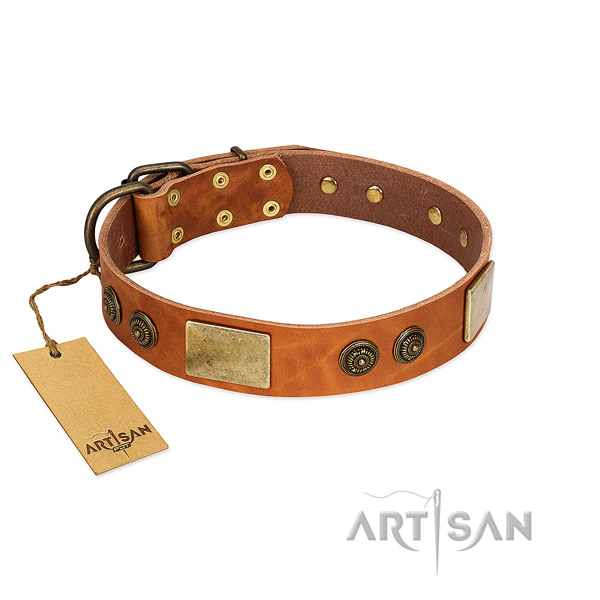 Extraordinary genuine leather dog collar for daily walking