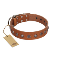 """Silver Age"" Fashionable FDT Artisan Tan Leather dog Collar with Silver-Like Studs"