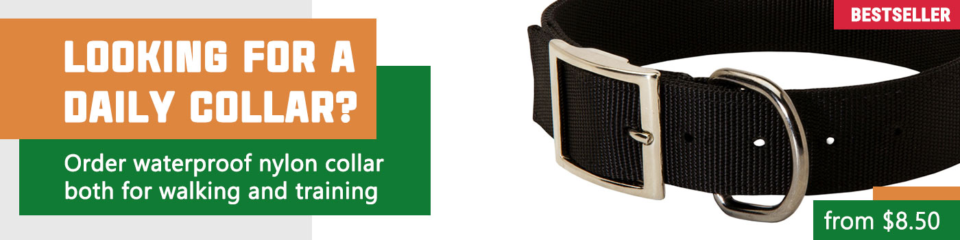 All-Weather Nylon Collar for Training and Walking Your Beloved Dog