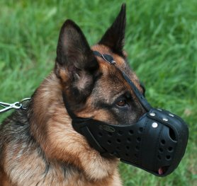 Purchasing the Right Muzzle for your Dog